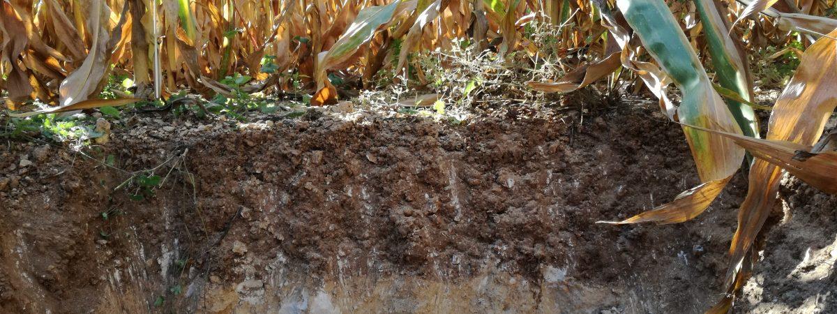 agriculture-slider-profil-sol