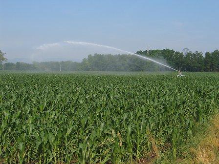 Définition des besoins en irrigation sur le val d'Authion